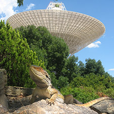 Lizard sitting on an rock in front of trees and the antenna Deep Space Station 43.