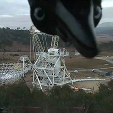 Bird looking into the camera from the top with the antenna Deep Space Station 35 being constructed behind it.