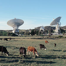 A field with brown and black cows in the foreground with four antennas of the Canberra Deep Space Communication Complex in the background.